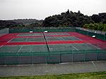 uguisu_tennis_01.jpg