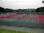 uguisu_tennis_02.jpg